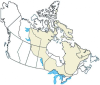 canadian-shield.png